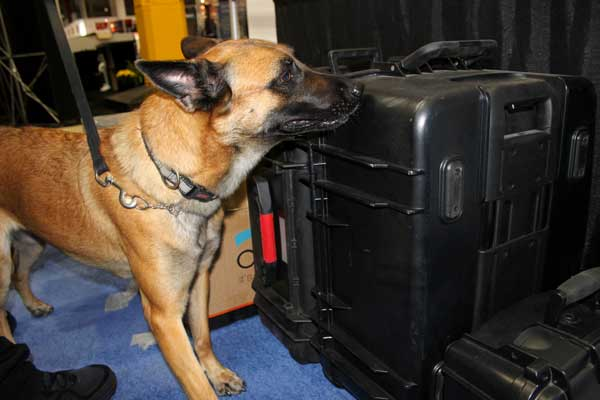 Private Security K9