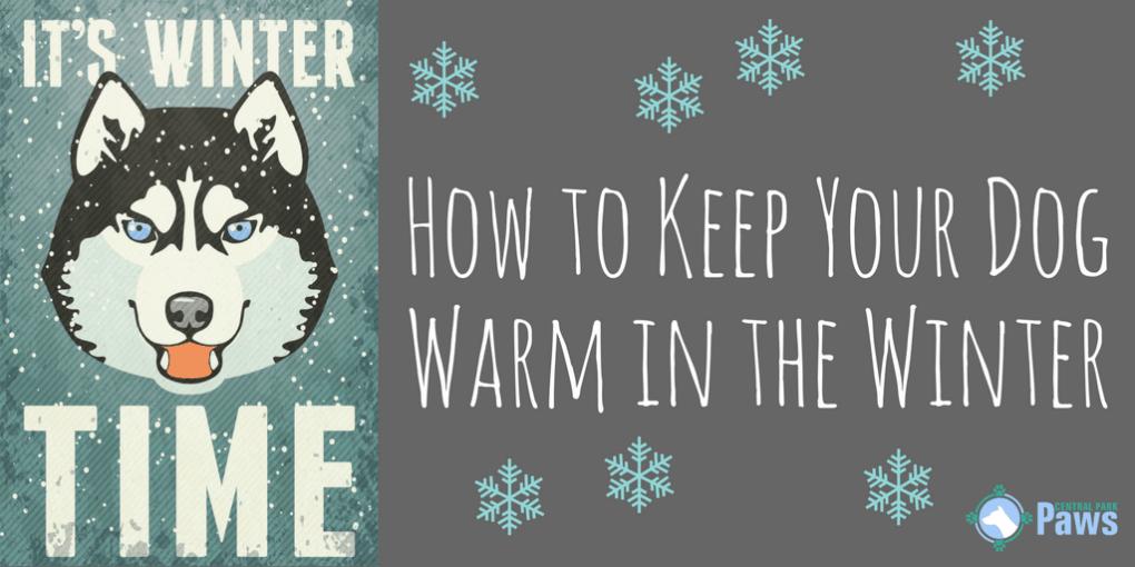 Heated Winter Houses Dog