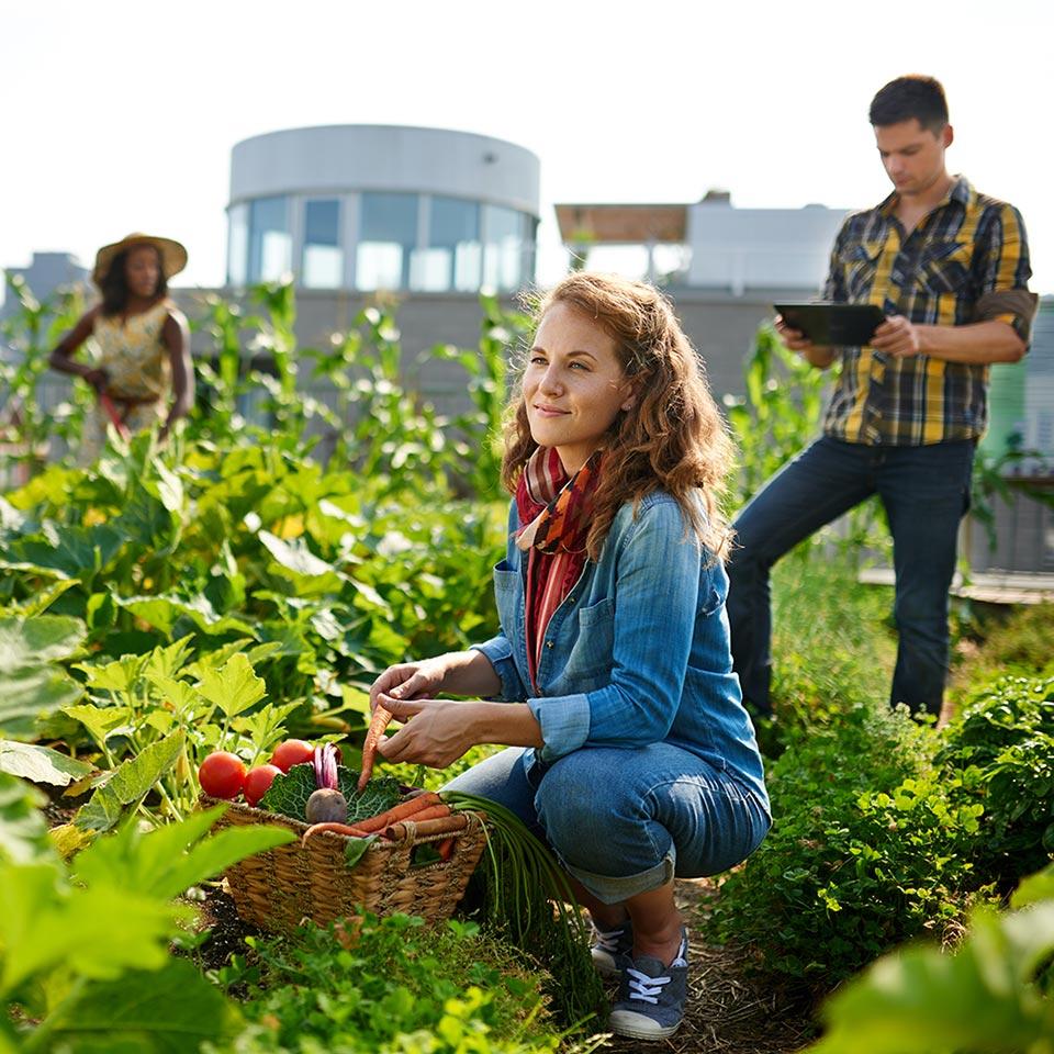 Organic Gardening Diploma Course - Centre of Excellence