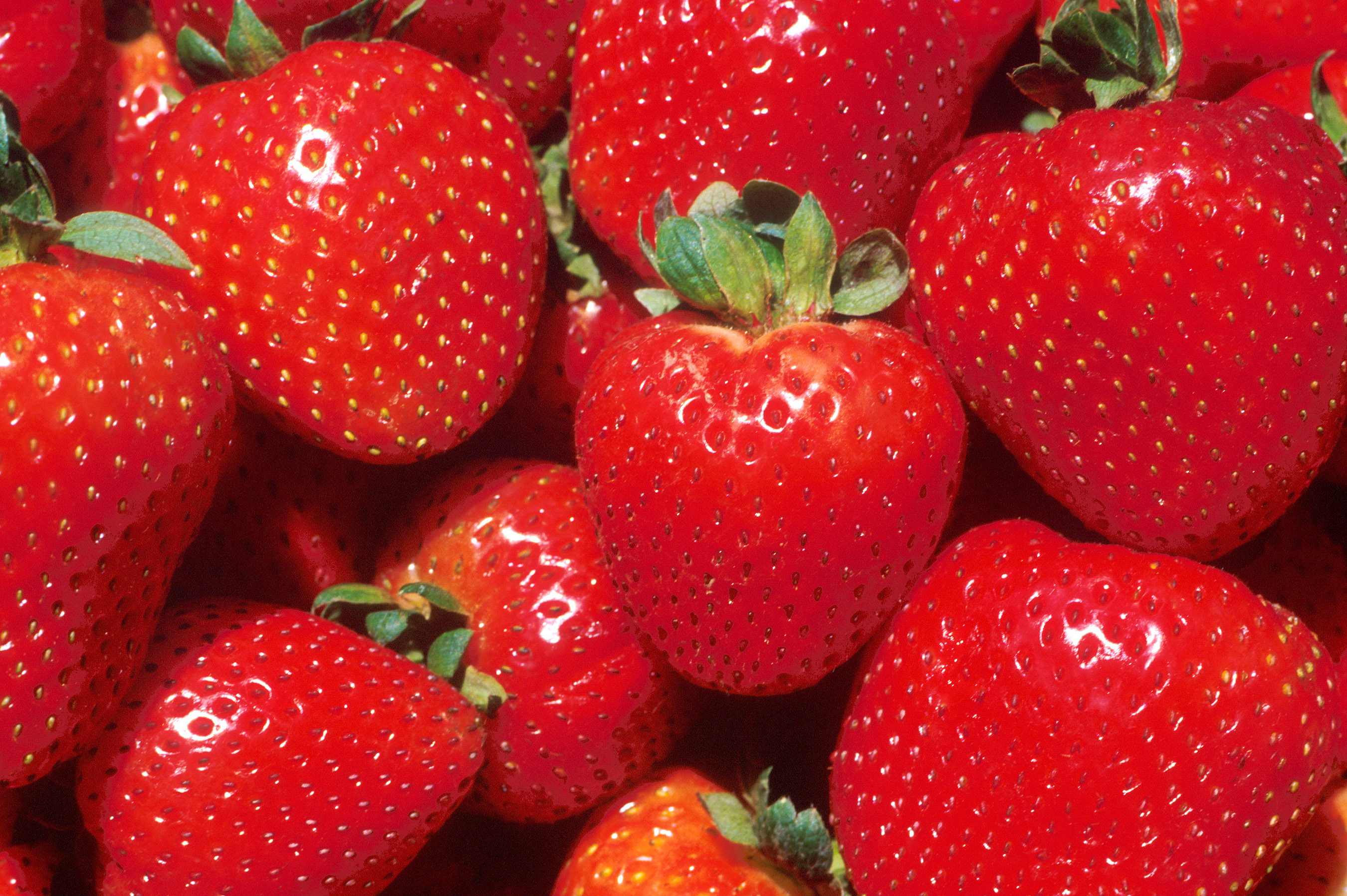 Growing Strawberries At Home Nc State Extension