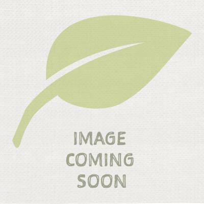 Non Invasive Bamboo Varieties