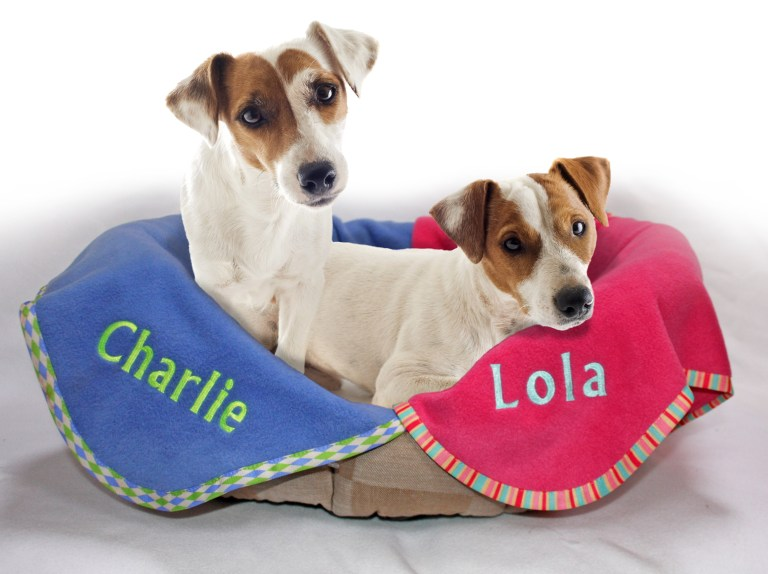 What Does Your Dog's Name Mean To Your Dog?