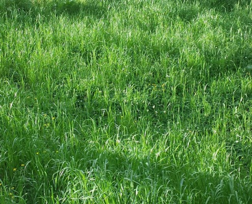 Fall is the Time to Seed Your Pastures | | Cherokee Feed ...