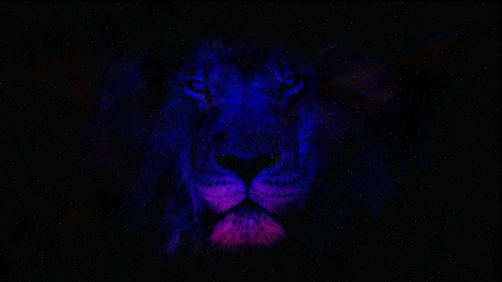4k Uhd Backgrounds Lion