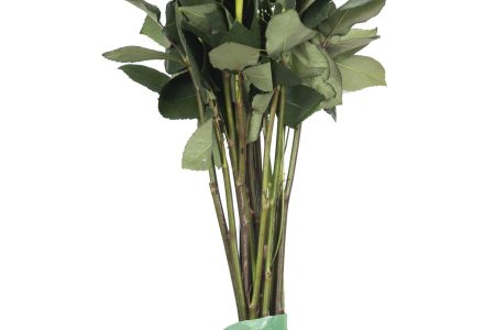 Chrysal Cleaner Archives   Chrysal Flower Food Increasing the vase life of your flowers after Valentine s Day