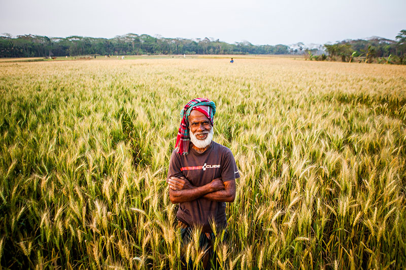 Cereal Systems Initiative For South Asia 187 Cimmyt