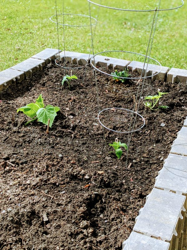 plants growing in a raised garden bed