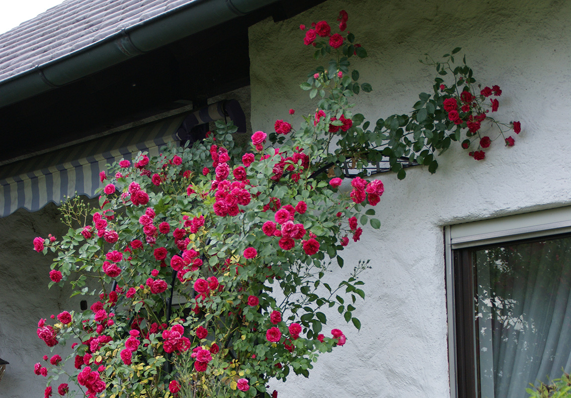 Half Round Rose Arch Bagatelle Classic Garden Elements Uk
