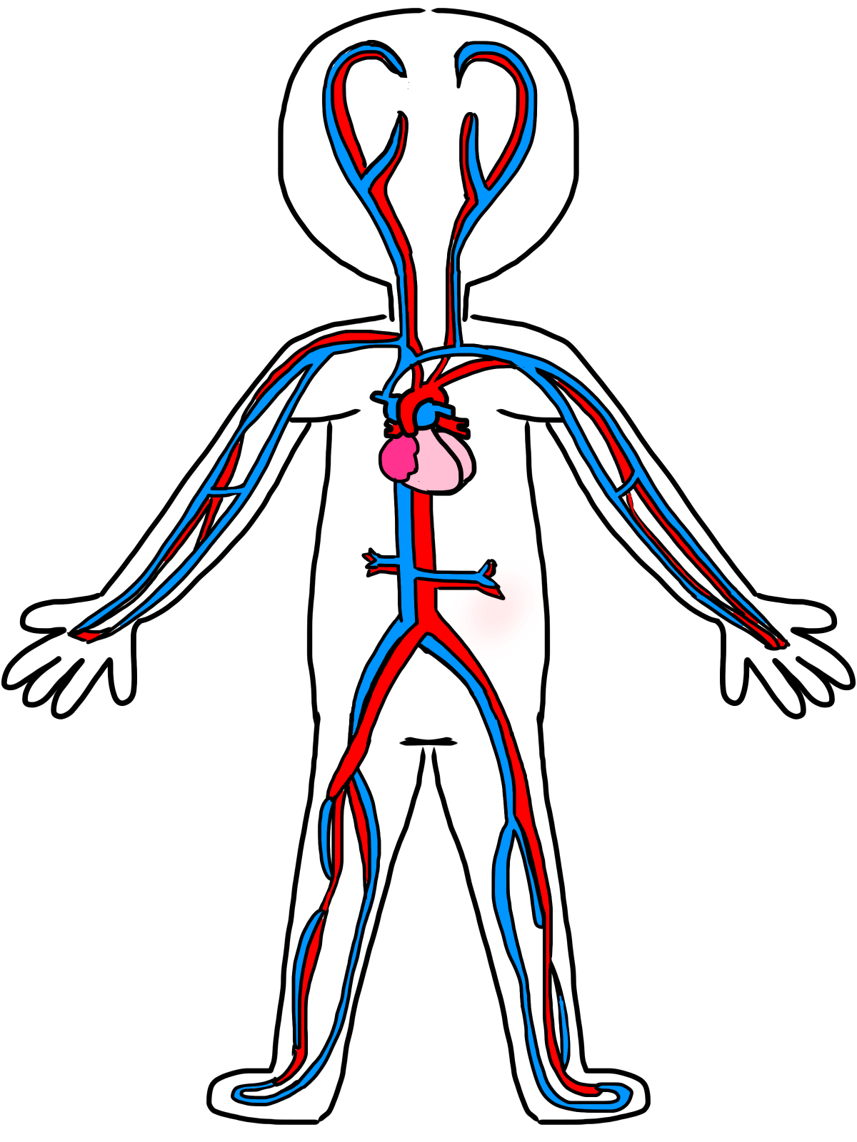 Circulatory System Get a run down of the human circulatory system with this informative video Learn how the heart arteries capillaries and veins work together to
