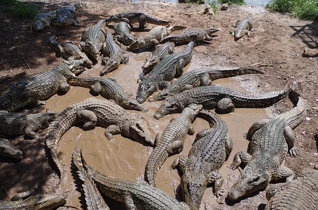 Animales Marinos De Cuba