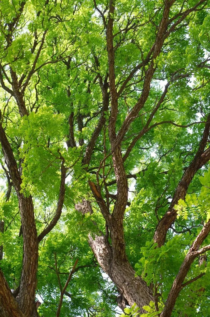 Leaves Sycamore Leaves Oak Pine Maple Leaves Leaves Pictures
