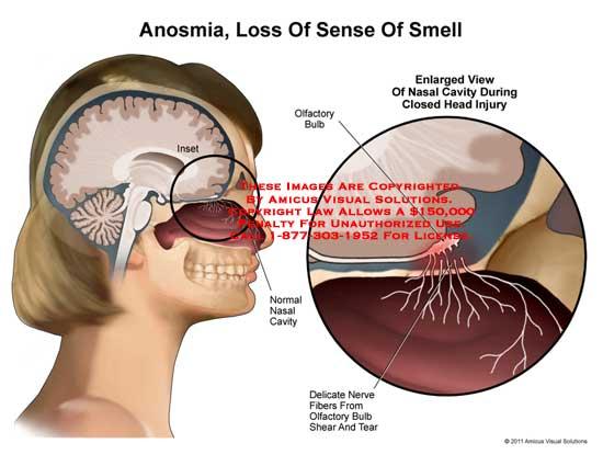 16 human nose anatomy diagram