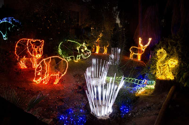 Zoo Lights Phoenix