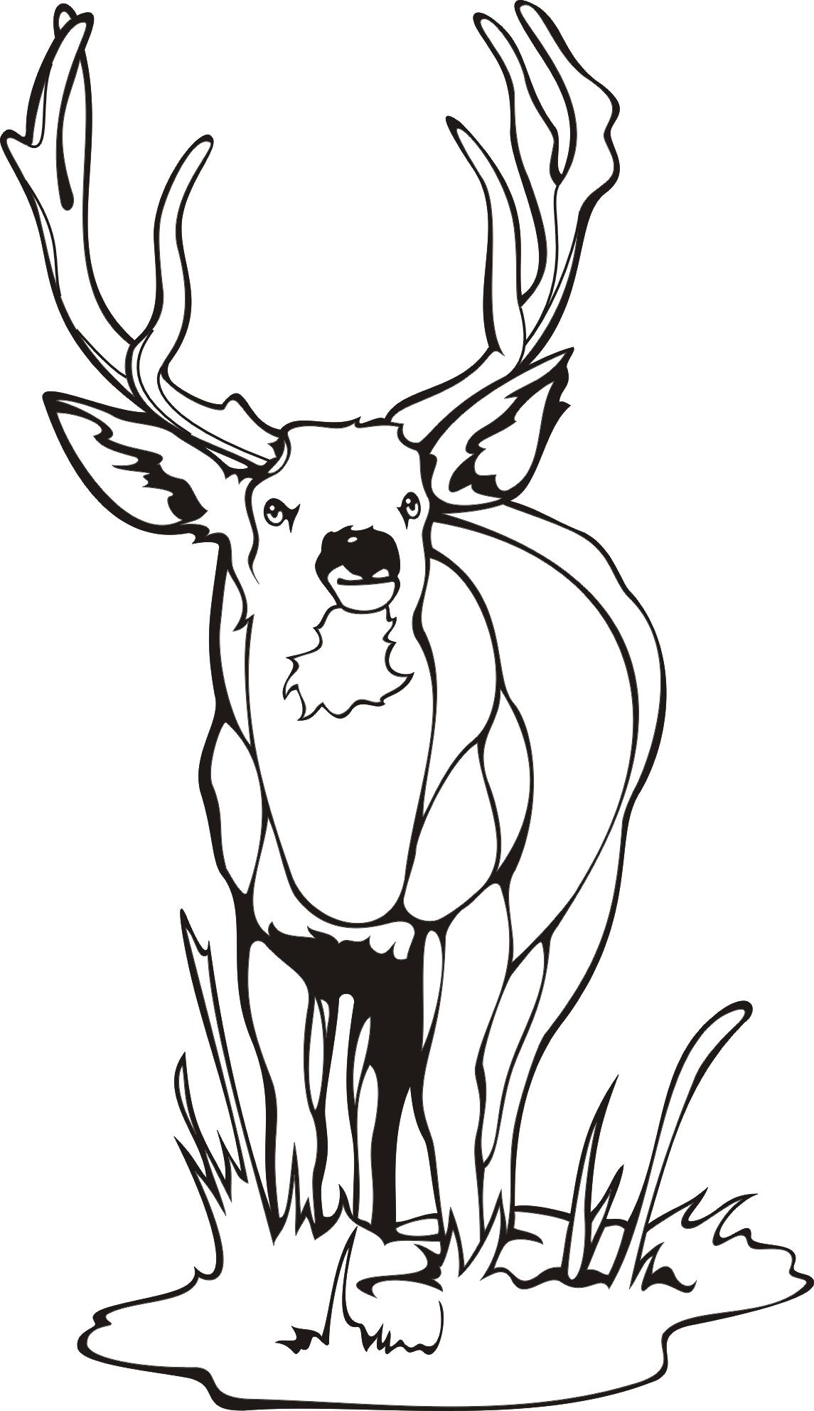 Printable Deer Coloring Pages Coloring Me