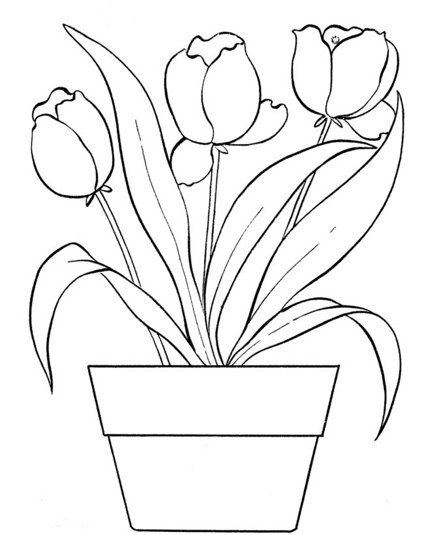Tulip Coloring Pages Coloring Page