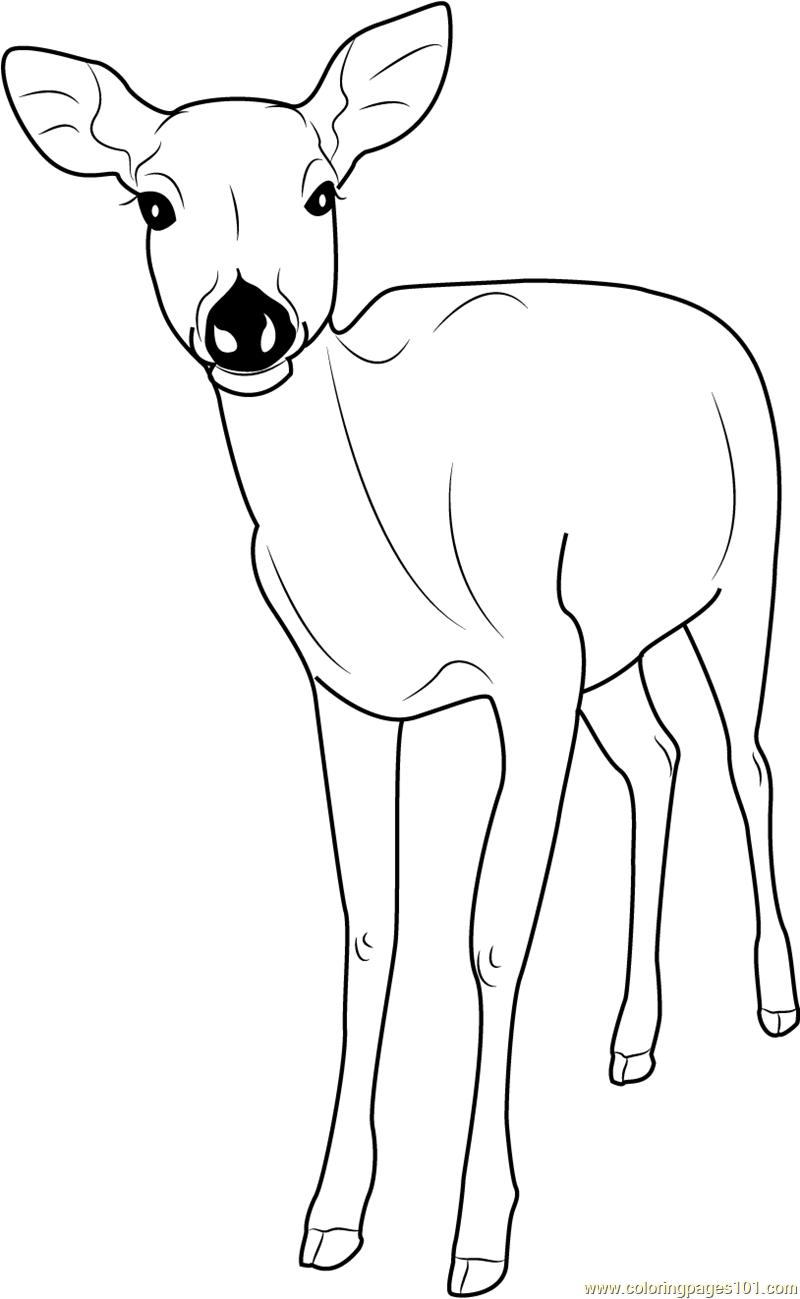 Deer Coloring Pages Printable Coloring Pages Of Deers