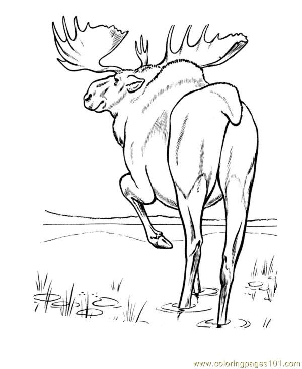 moose coloring page # 32