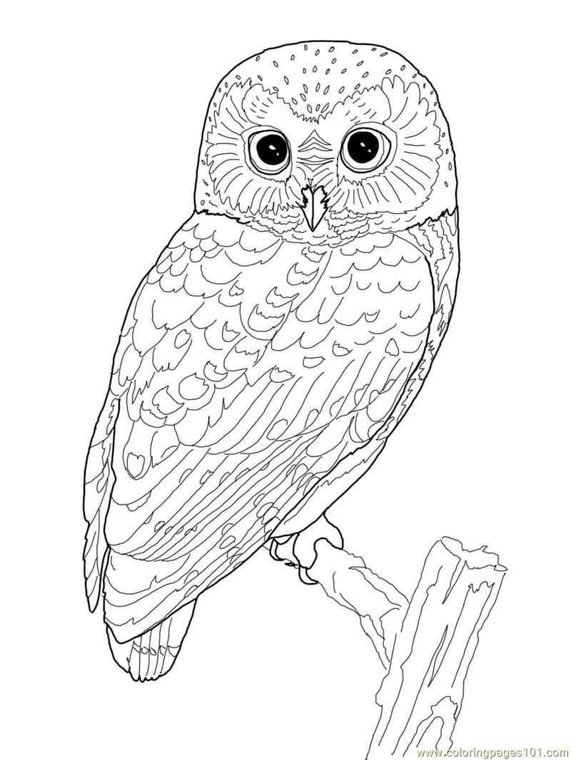 Owl Coloring Page Free Owl Coloring Pages Coloringpages101