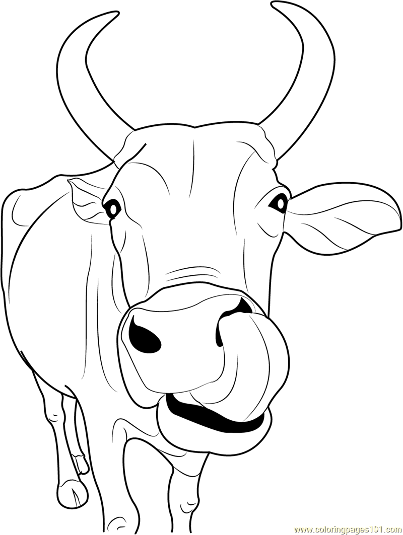 Indian Cow Face Coloring Page Free Cow Coloring Pages