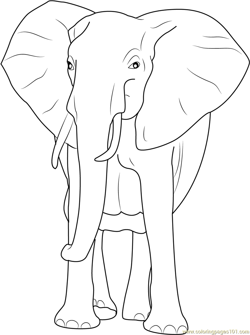 African Bush Elephant Coloring Page Free Elephant Coloring Pages