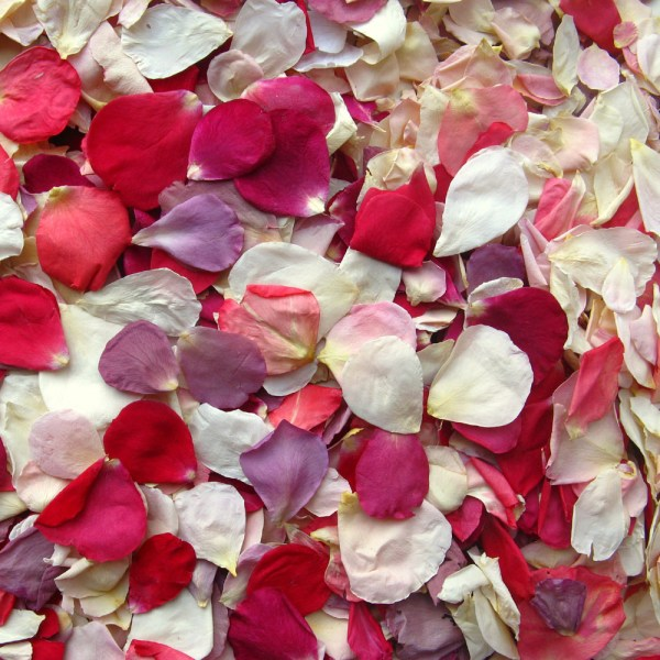 Pre mixed  Rainbow Small Natural Rose Petals   Real Flower Petal     Rainbow small natural rose petals   confetti petals real flower petal  confetti