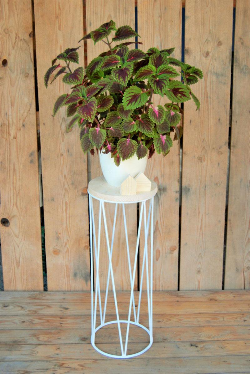 Easy Indoor Plants Grow