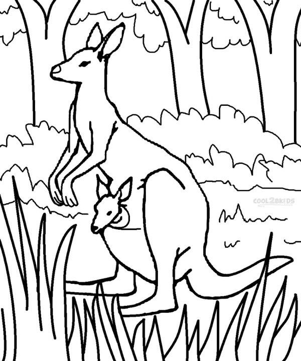 kangaroo coloring pages # 19