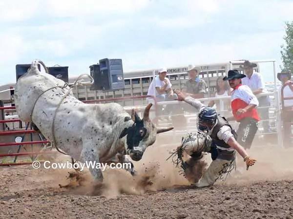 Bull Riding Wrecks Page 2