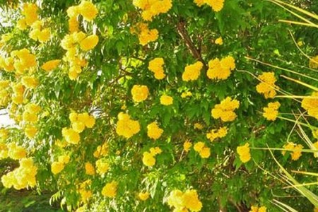 Flower shop near me yellow flowering trees in florida flower shop yellow flowering trees in florida the flowers are very beautiful here we provide a collections of various pictures of beautiful flowers charming mightylinksfo
