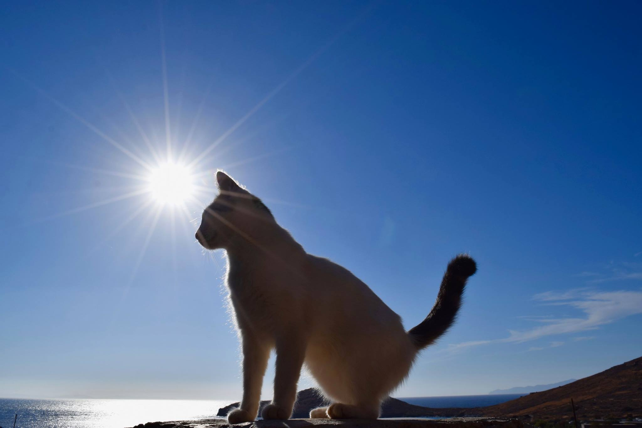 Greek island flooded with job applications for cat ...