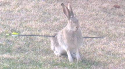 Rabbit Shot By Arrow Ctv Calgary News