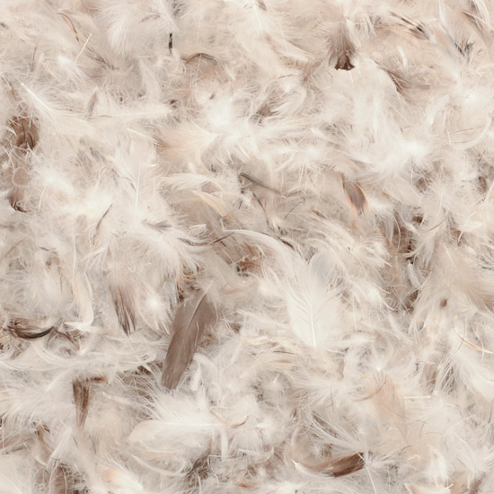 Feather And Down Filling The Cushion Warehouse