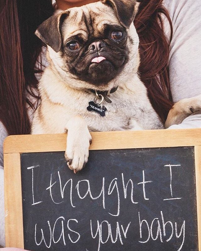 The Cutest Pet Pregnancy Announcements Are Here