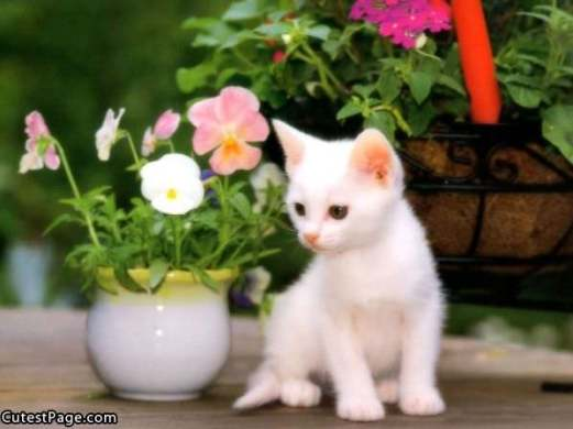 White Cute Kitten With Flowers   All Cute Pictures