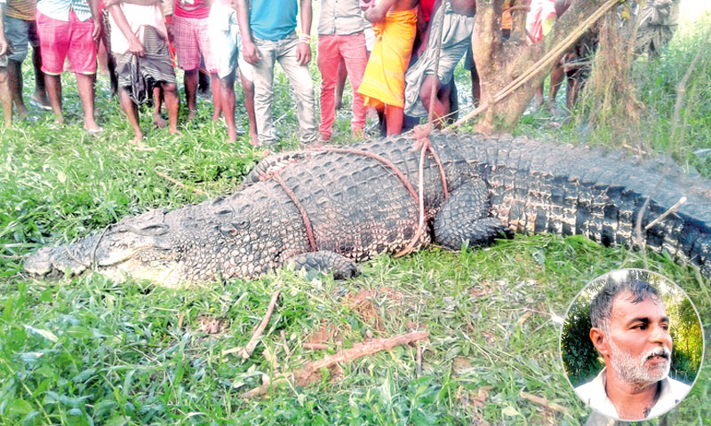 man eaten by crocodile - 800×480