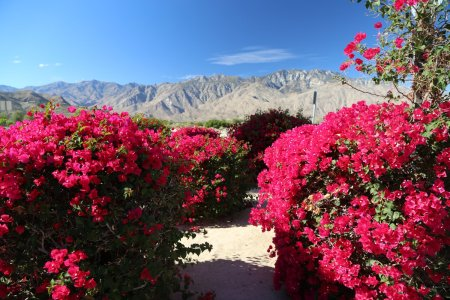 Flower shop near me flower delivery palm desert flower shop flower delivery palm desert the flowers are very beautiful here we provide a collections of various pictures of beautiful flowers charming mightylinksfo