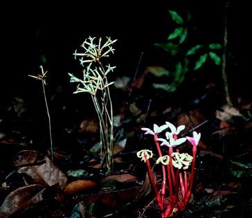 Ectomycorrhizal And Arbuscular Mycorrhizal Fungi
