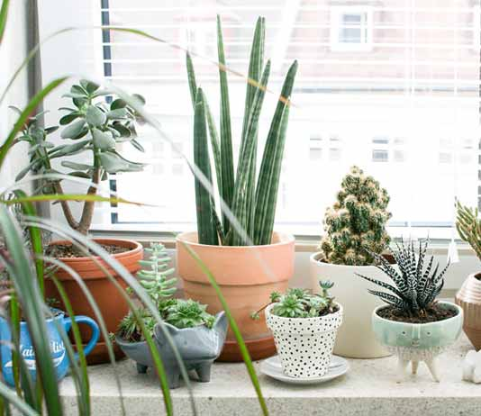 Inside Plants Names