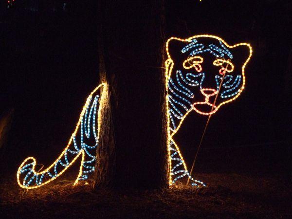 Zoo Lights Denver Discount