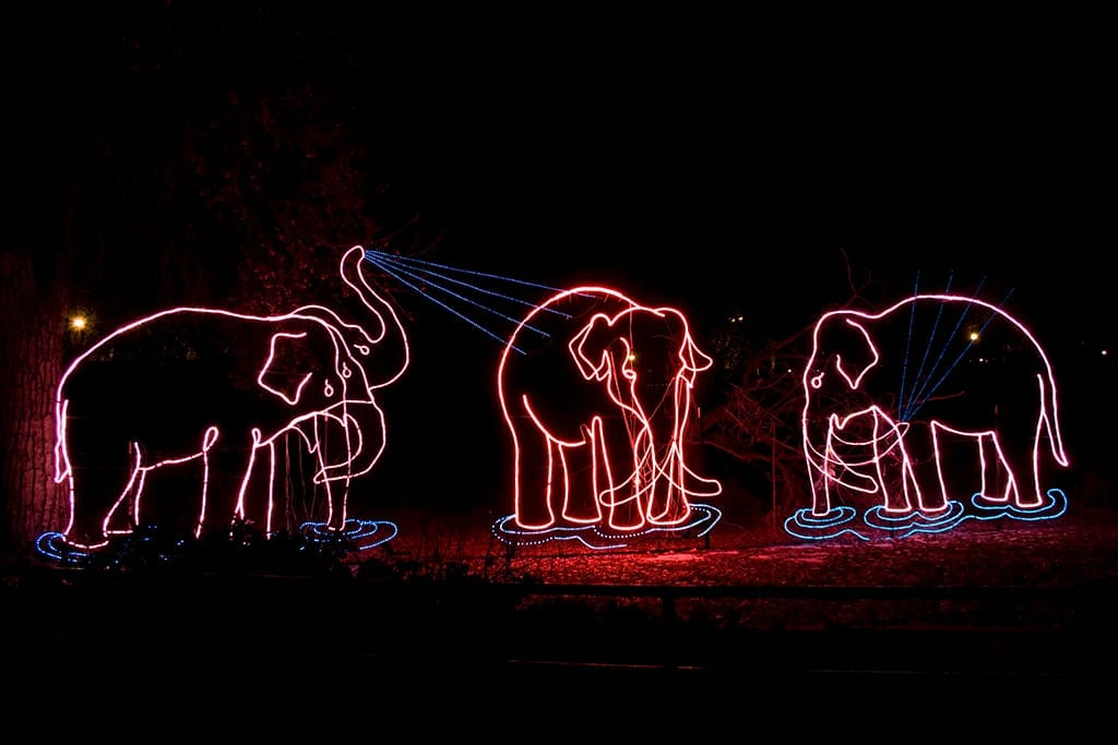 Zoo Lights Prices