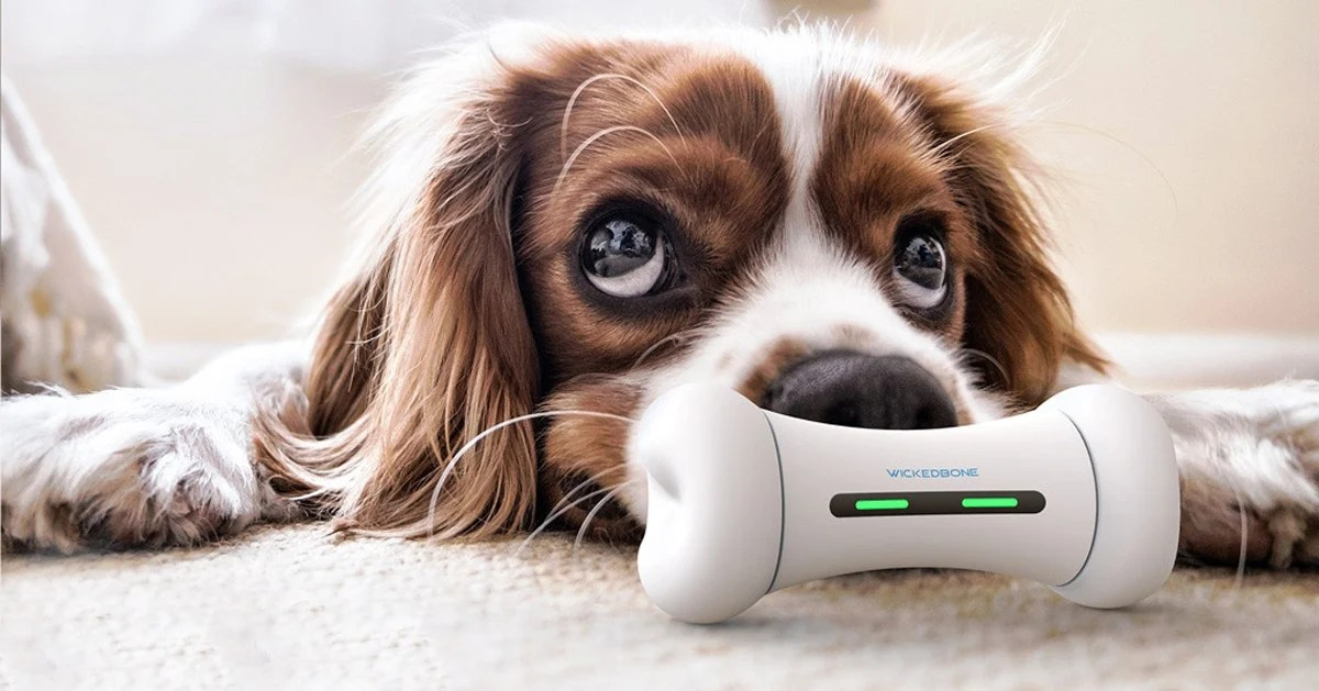 Wickedbone Is The Smart Dog Toy To Cure Your Puppy S Anxiety