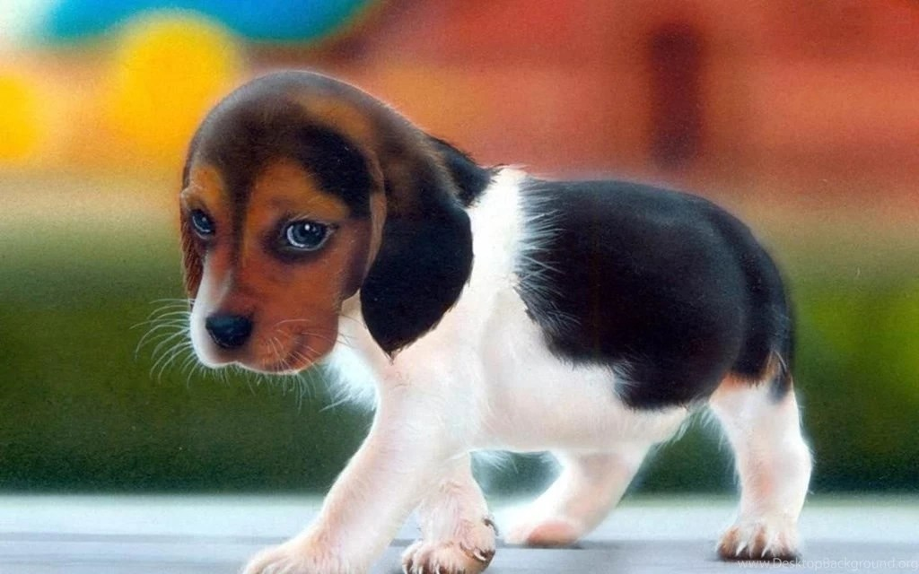 Cute Puppy Wallpapers For Desktop Mobile Backgrounds     Desktop     Cute Puppy Wallpapers For Desktop Mobile Backgrounds     Desktop Background