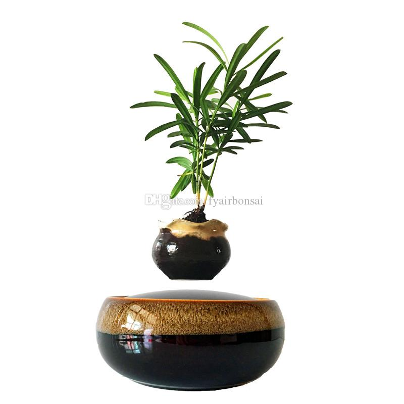 Japanese Floating Bonsai