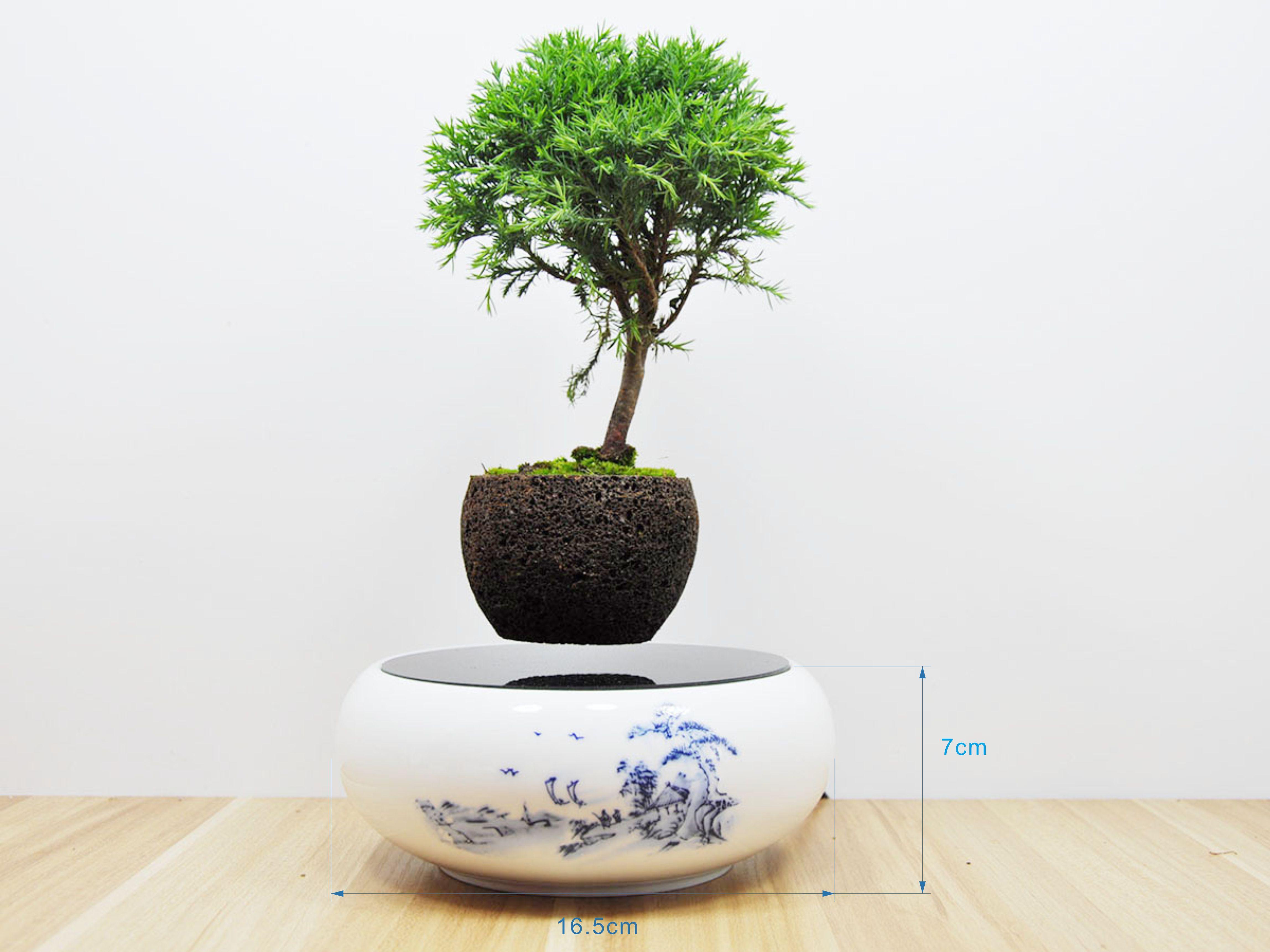 Floating Bonsai Cost