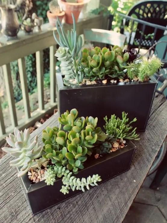 Small Succulent Plants Bulk