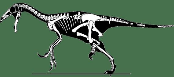 Beipiaosaurus Skeletal Dinochecker Dinosaur Gallery