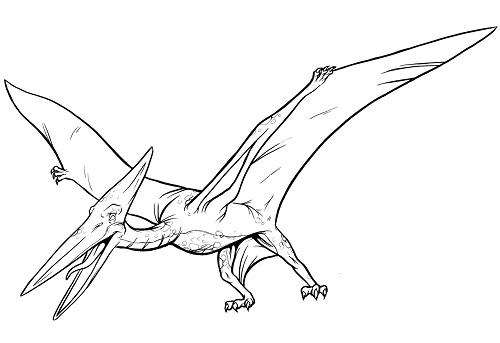 Realistic Pterodactyl Dinosaur Clip Art