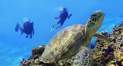 Dive Center for Sale - PADI 5* IDC Dive Centre / Hotel ...
