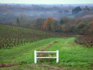 Coteaux du Layon vineyards - Chateau Soucherie