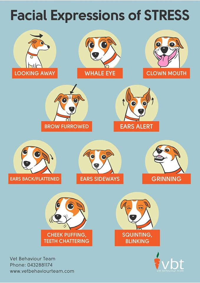 Causes Bloat Dogs